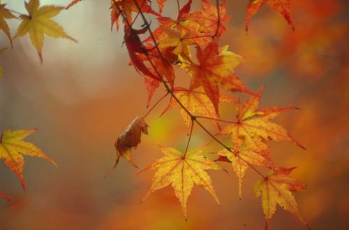 15 grunner til å glede seg til høsten!