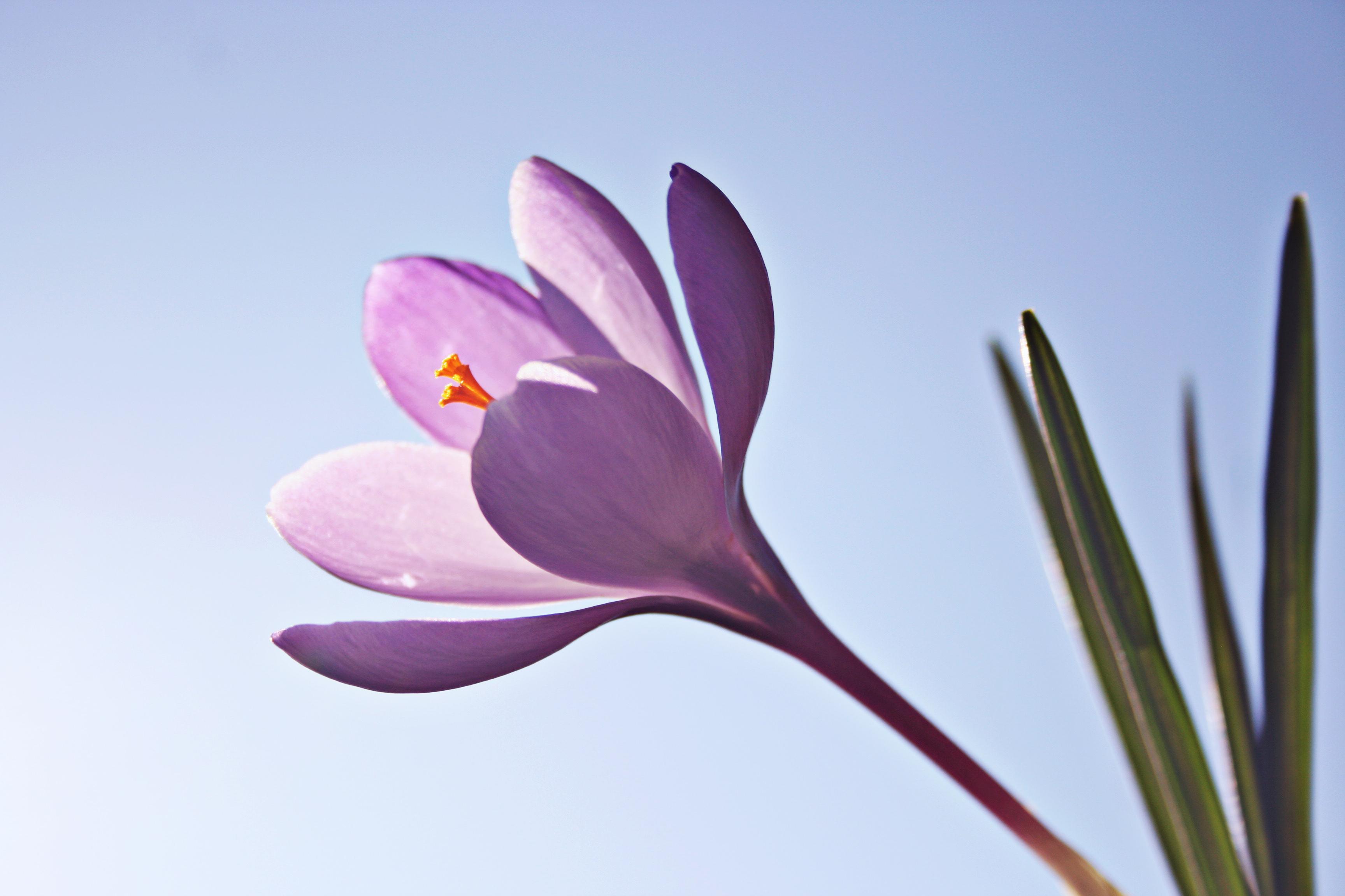 35 grunner til å glede seg til våren!