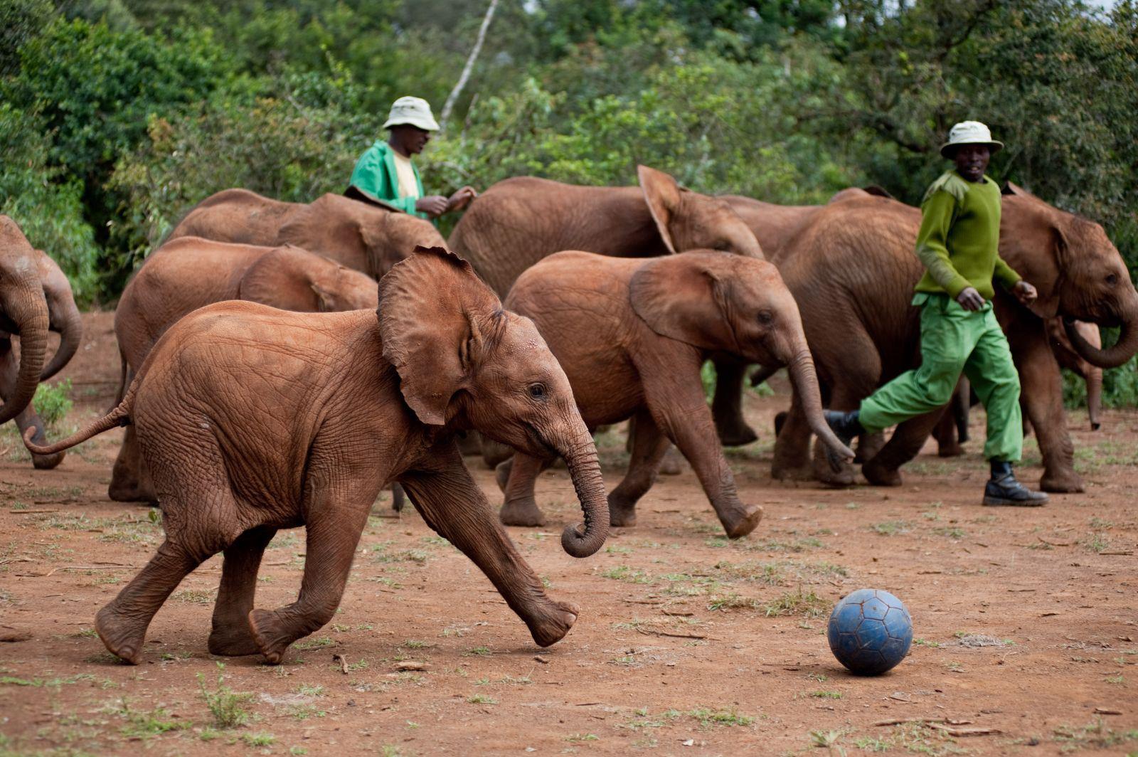 Elefanten og tauet
